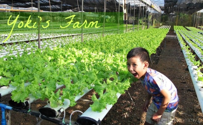 3 Reasons to Visit Yoki's Farm